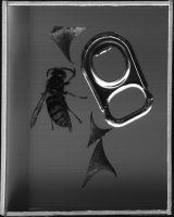 http://stephenmonger.com/files/gimgs/th-14_Wasp.jpg